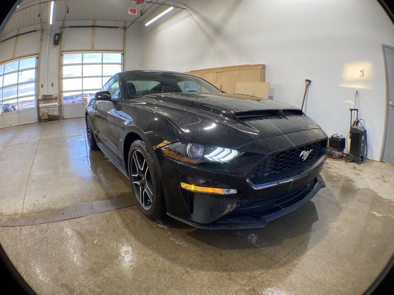 2019 Ford Mustang for sale in Stettler, AB | New Ford Sales